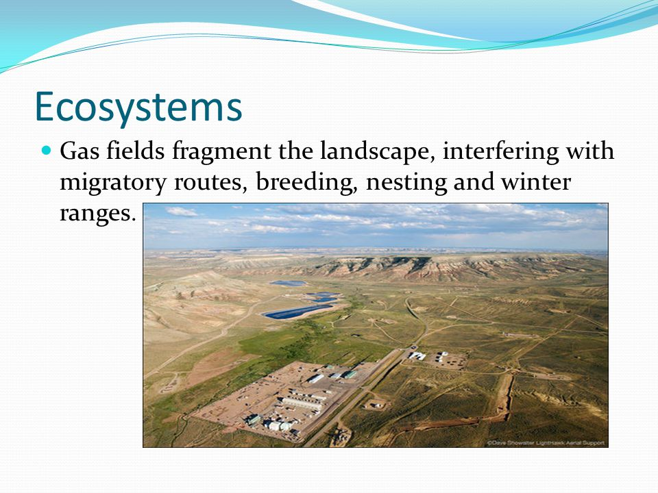 Ecosystems Gas fields fragment the landscape, interfering with migratory routes, breeding, nesting and winter ranges.