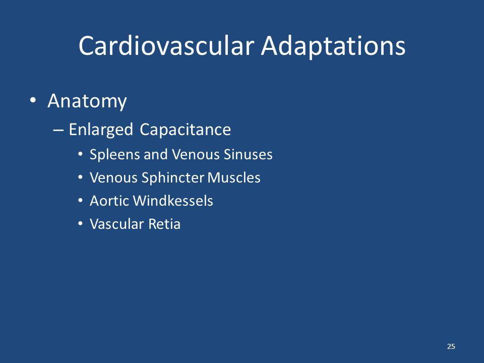 Cardiovascular Adaptations Anatomy – Enlarged Capacitance Spleens and Venous Sinuses Venous Sphincter Muscles Aortic Windkessels Vascular Retia 25
