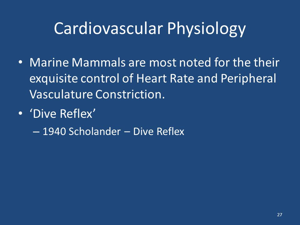 Cardiovascular Physiology Marine Mammals are most noted for the their exquisite control of Heart Rate and Peripheral Vasculature Constriction. Dive Re