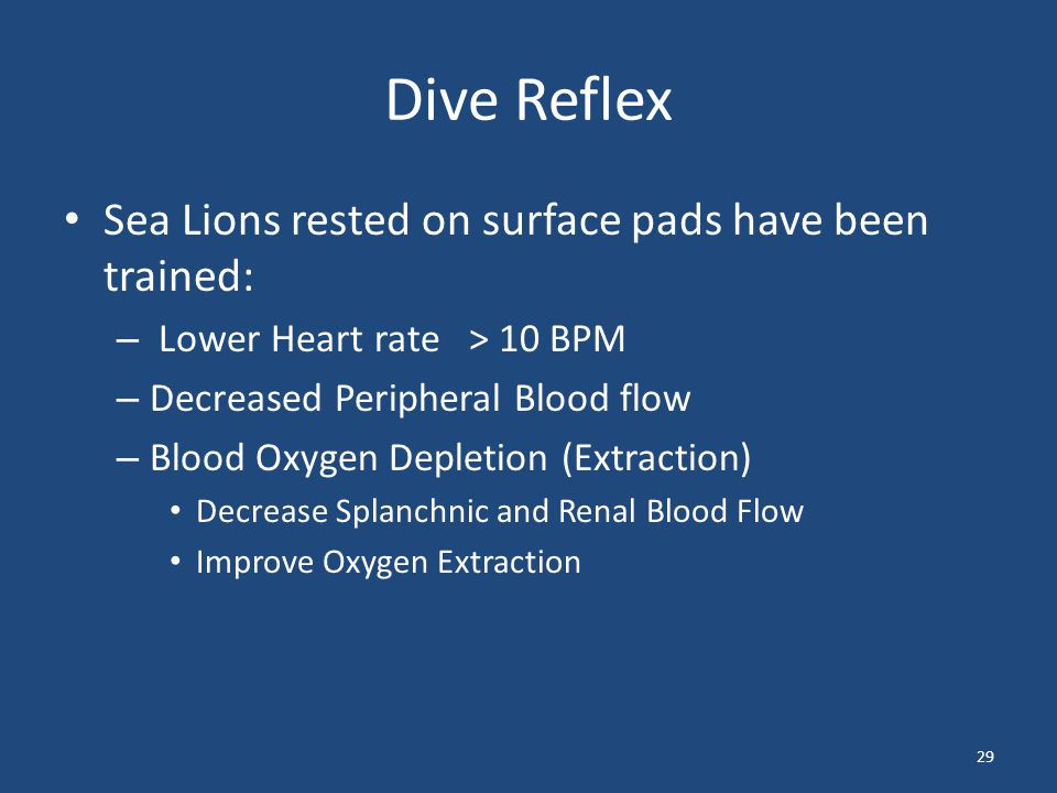 Dive Reflex Sea Lions rested on surface pads have been trained: – Lower Heart rate > 10 BPM – Decreased Peripheral Blood flow – Blood Oxygen Depletion
