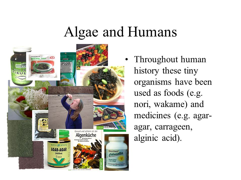 Algae and Humans Throughout human history these tiny organisms have been used as foods (e.g. nori, wakame) and medicines (e.g. agar- agar, carrageen,