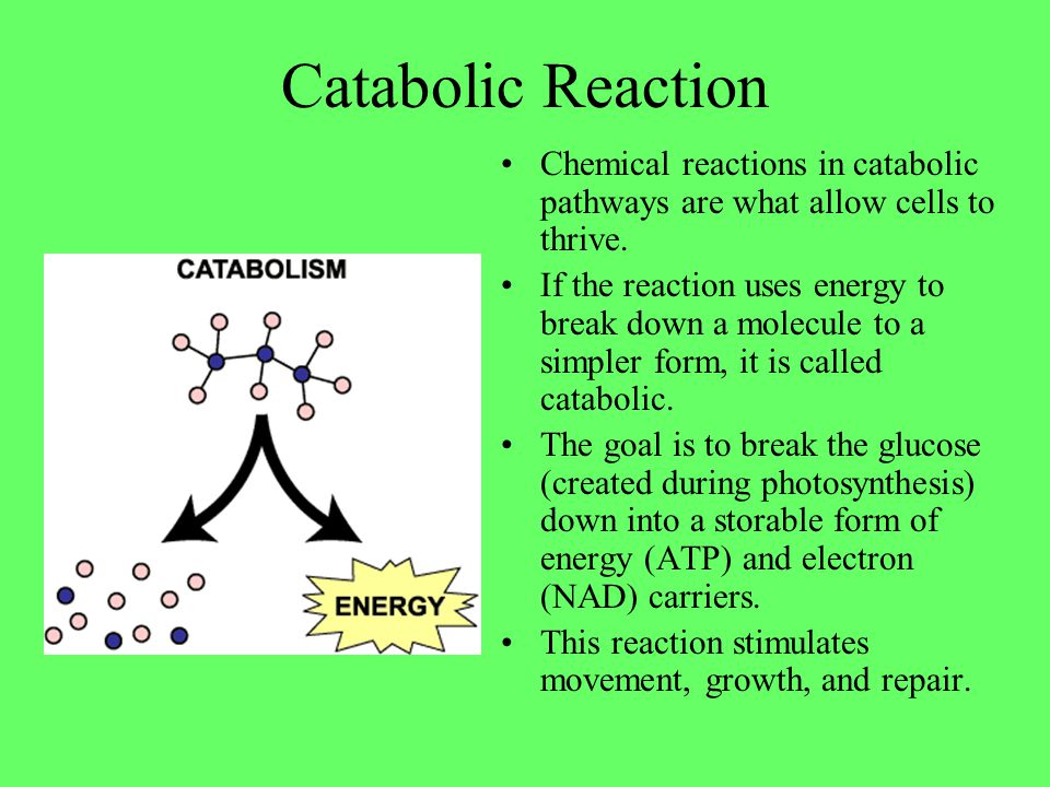 Catabolic Reaction Chemical reactions in catabolic pathways are what allow cells to thrive. If the reaction uses energy to break down a molecule to a