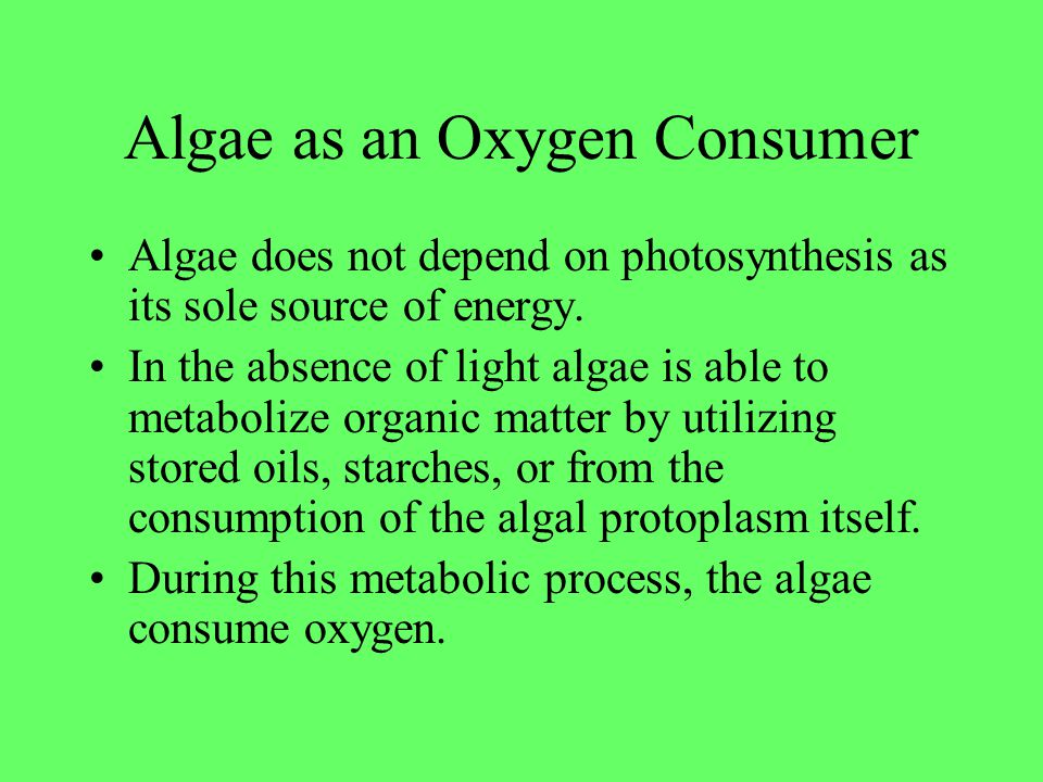 Algae as an Oxygen Consumer Algae does not depend on photosynthesis as its sole source of energy. In the absence of light algae is able to metabolize