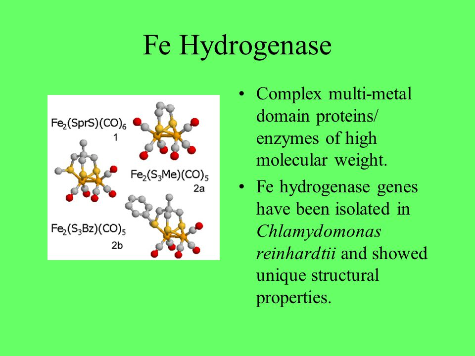 Fe Hydrogenase Complex multi-metal domain proteins/ enzymes of high molecular weight. Fe hydrogenase genes have been isolated in Chlamydomonas reinhar