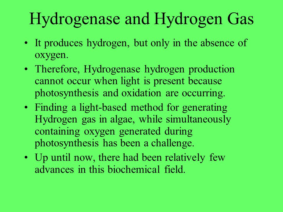 Hydrogenase and Hydrogen Gas It produces hydrogen, but only in the absence of oxygen. Therefore, Hydrogenase hydrogen production cannot occur when lig