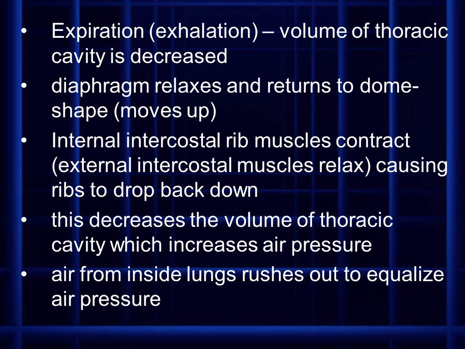Expiration (exhalation) – volume of thoracic cavity is decreased diaphragm relaxes and returns to dome- shape (moves up) Internal intercostal rib musc