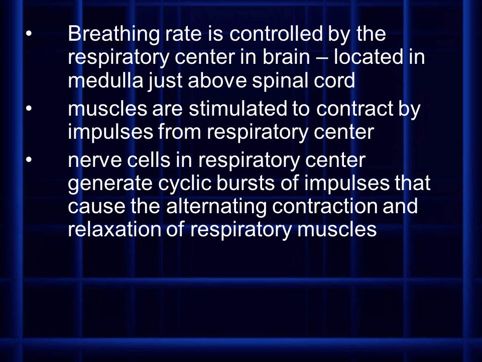 Breathing rate is controlled by the respiratory center in brain – located in medulla just above spinal cord muscles are stimulated to contract by impu