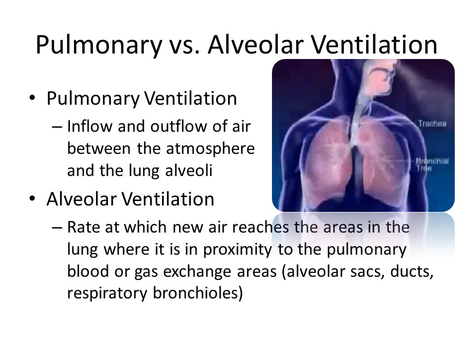 Pulmonary vs. Alveolar Ventilation Pulmonary Ventilation – Inflow and outflow of air between the atmosphere and the lung alveoli Alveolar Ventilation