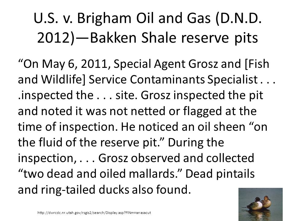 U.S. v. Brigham Oil and Gas (D.N.D. 2012)Bakken Shale reserve pits On May 6, 2011, Special Agent Grosz and [Fish and Wildlife] Service Contaminants Sp