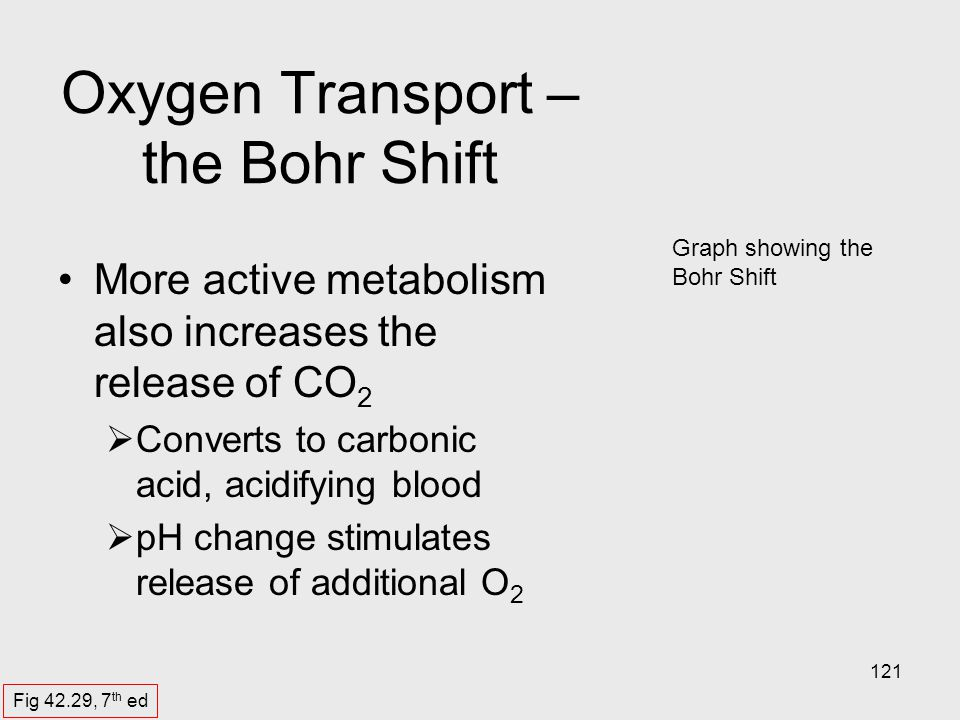 121 Graph showing the Bohr Shift Oxygen Transport – the Bohr Shift More active metabolism also increases the release of CO 2 Converts to carbonic acid