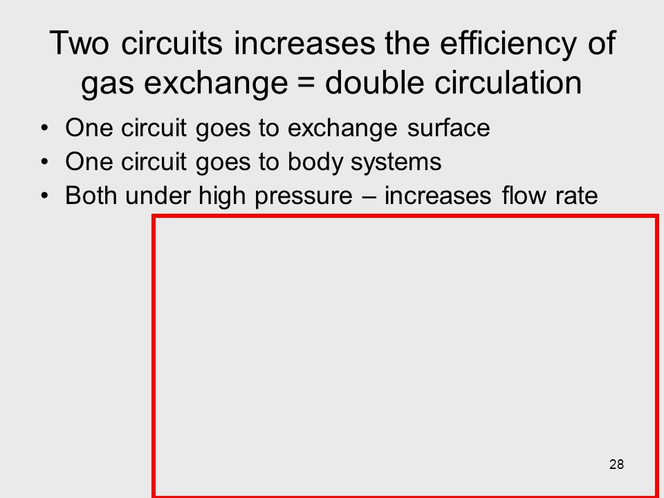 28 Two circuits increases the efficiency of gas exchange = double circulation One circuit goes to exchange surface One circuit goes to body systems Bo
