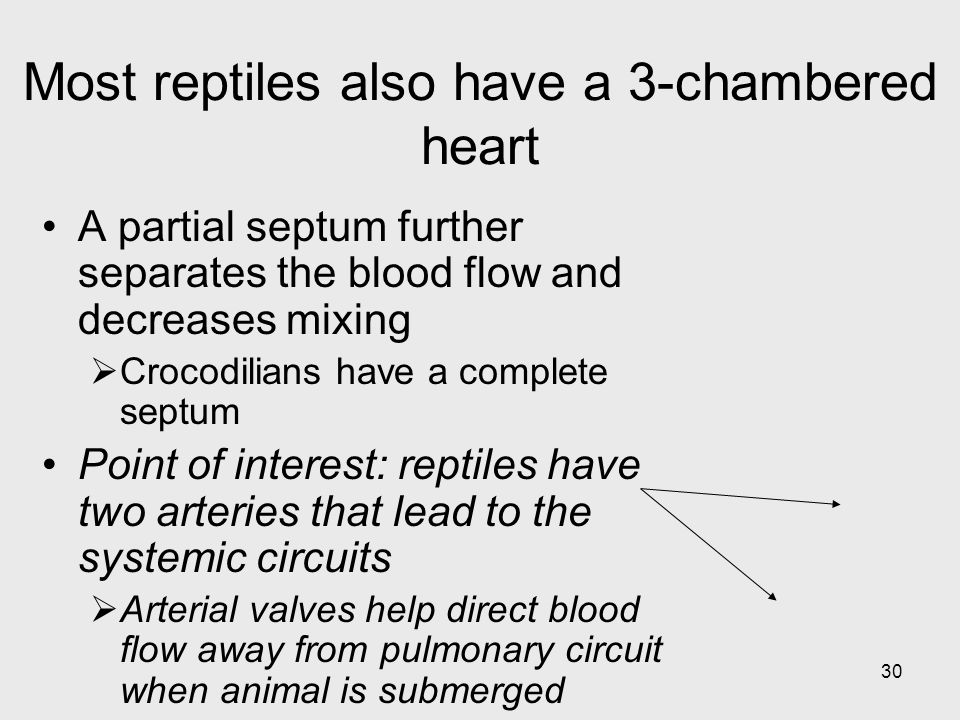 30 Most reptiles also have a 3-chambered heart A partial septum further separates the blood flow and decreases mixing Crocodilians have a complete sep