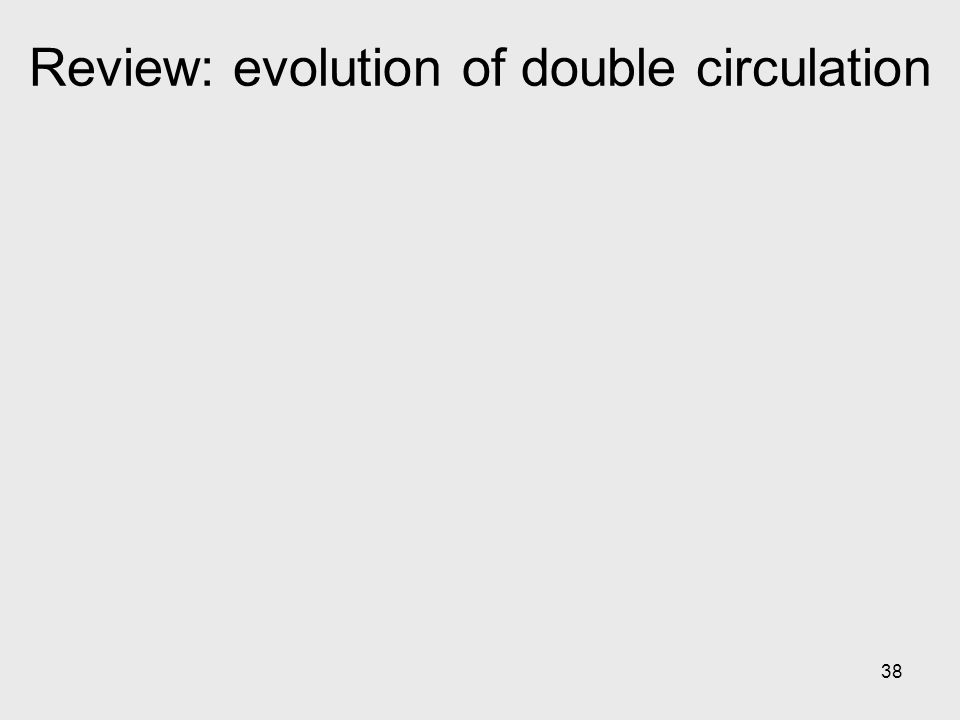 38 Review: evolution of double circulation