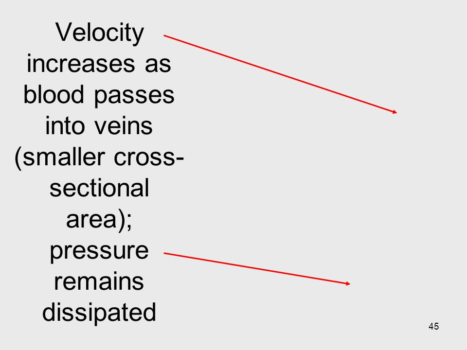 45 Velocity increases as blood passes into veins (smaller cross- sectional area); pressure remains dissipated