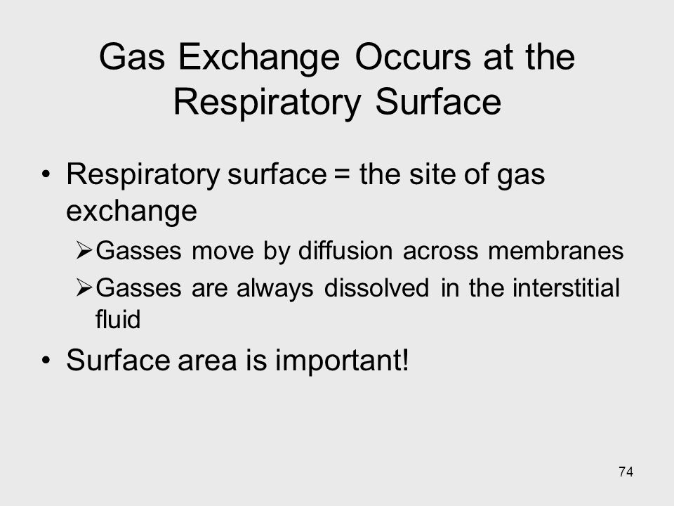 74 Gas Exchange Occurs at the Respiratory Surface Respiratory surface = the site of gas exchange Gasses move by diffusion across membranes Gasses are