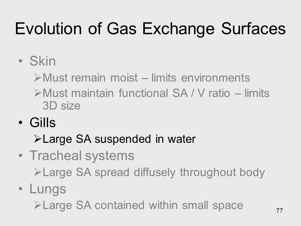 77 Evolution of Gas Exchange Surfaces Skin Must remain moist – limits environments Must maintain functional SA / V ratio – limits 3D size Gills Large
