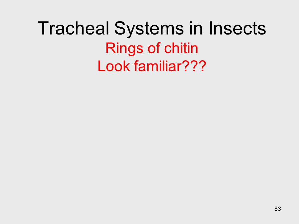 83 Tracheal Systems in Insects Rings of chitin Look familiar???