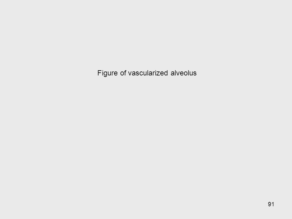 91 Figure of vascularized alveolus