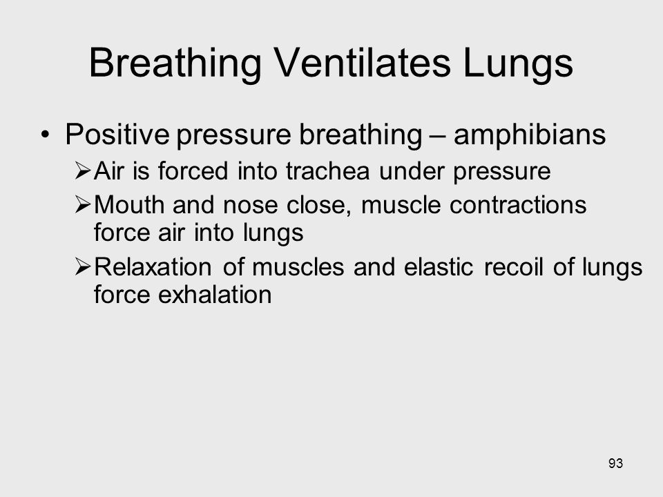 93 Breathing Ventilates Lungs Positive pressure breathing – amphibians Air is forced into trachea under pressure Mouth and nose close, muscle contract