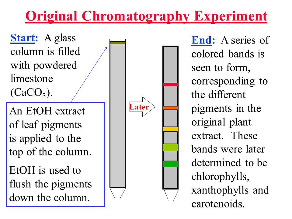 Chromatography: (Greek = chroma color and graphein writing ) Tswett named this new technique chromatography based on the fact that it separated the components of a solution by color.