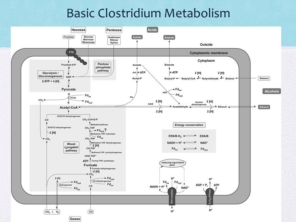Basic Clostridium Metabolism