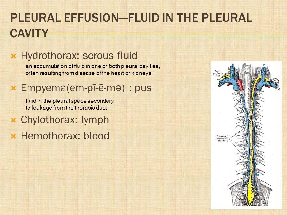 PLEURAL EFFUSIONFLUID IN THE PLEURAL CAVITY Hydrothorax: serous fluid Empyema(em-pī-ē-m ə ) : pus Chylothorax: lymph Hemothorax: blood an accumulation