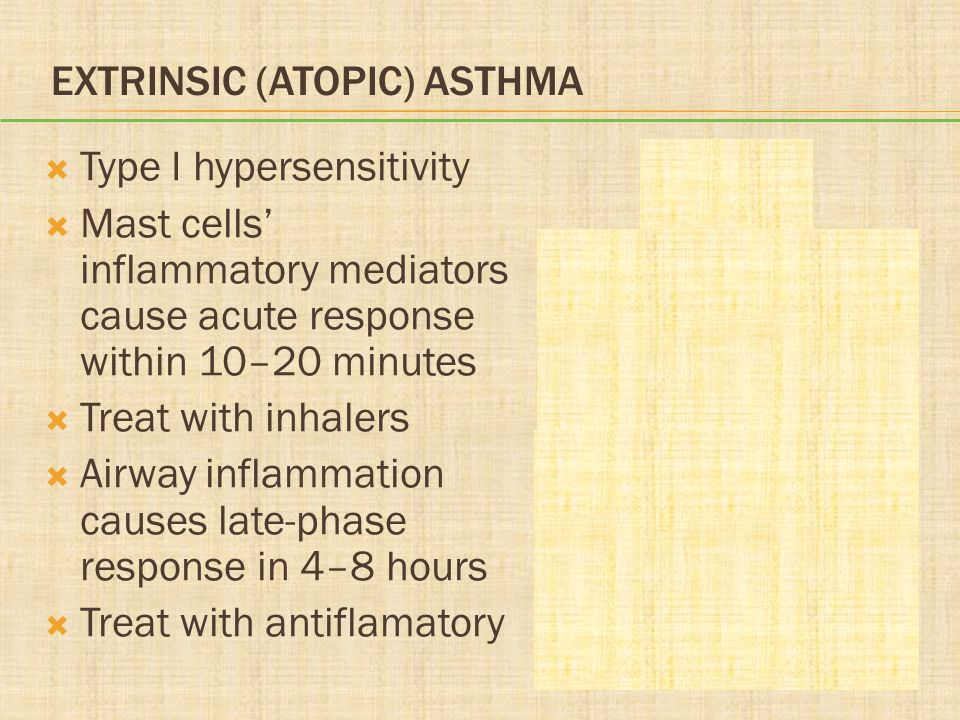 EXTRINSIC (ATOPIC) ASTHMA Type I hypersensitivity Mast cells inflammatory mediators cause acute response within 10–20 minutes Treat with inhalers Airw