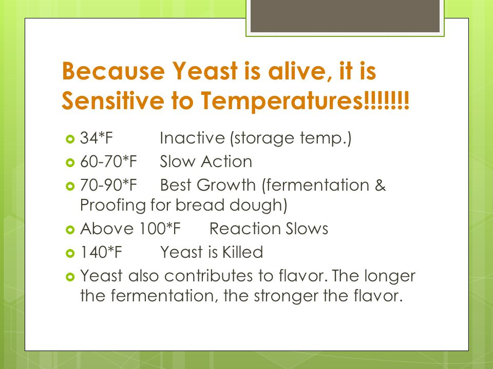 Yeast Fermentation: It is the process by which yeast acts on sugars and changes them into carbon dioxide gas and alcohol. The release of this gas prod