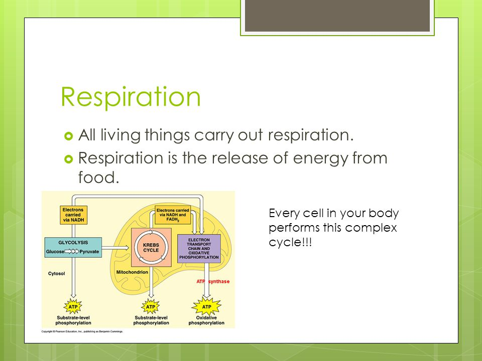 So…before we continue… Respiration is the release of energy from food. Gaseous exchange
