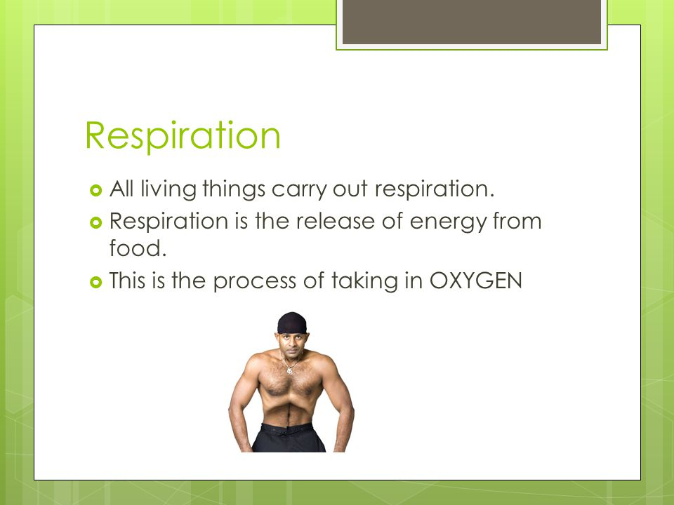 So…before we continue… Respiration is the release of energy from food.