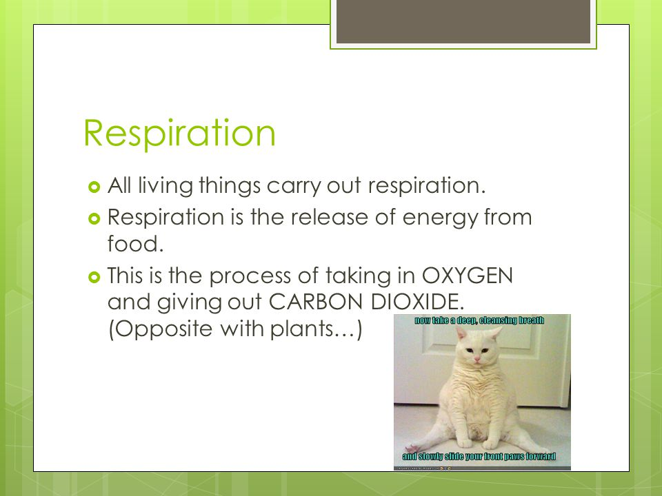 Respiration All living things carry out respiration.