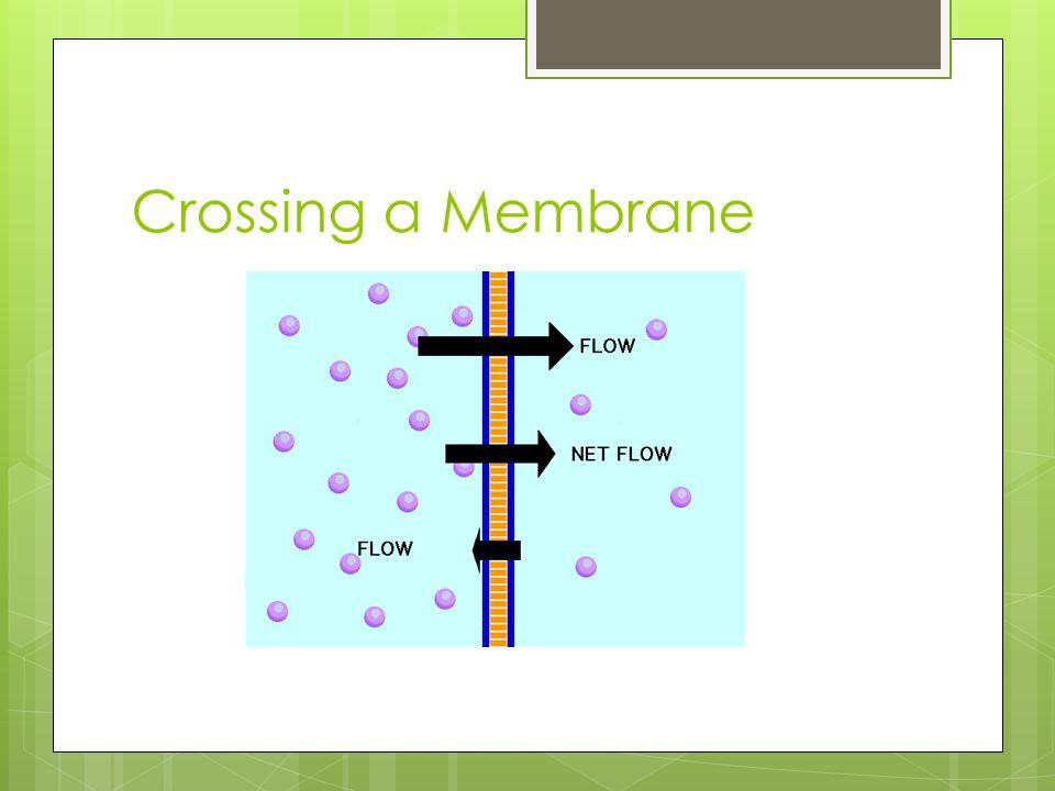 Crossing a Membrane