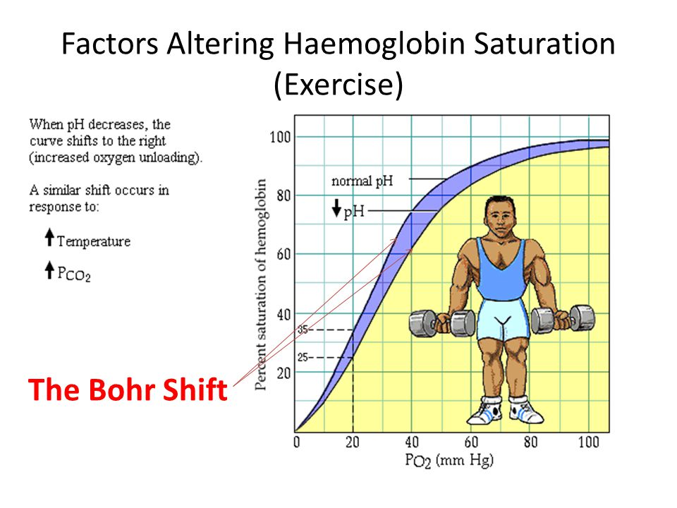 Factors Altering Haemoglobin Saturation (Exercise) The Bohr Shift