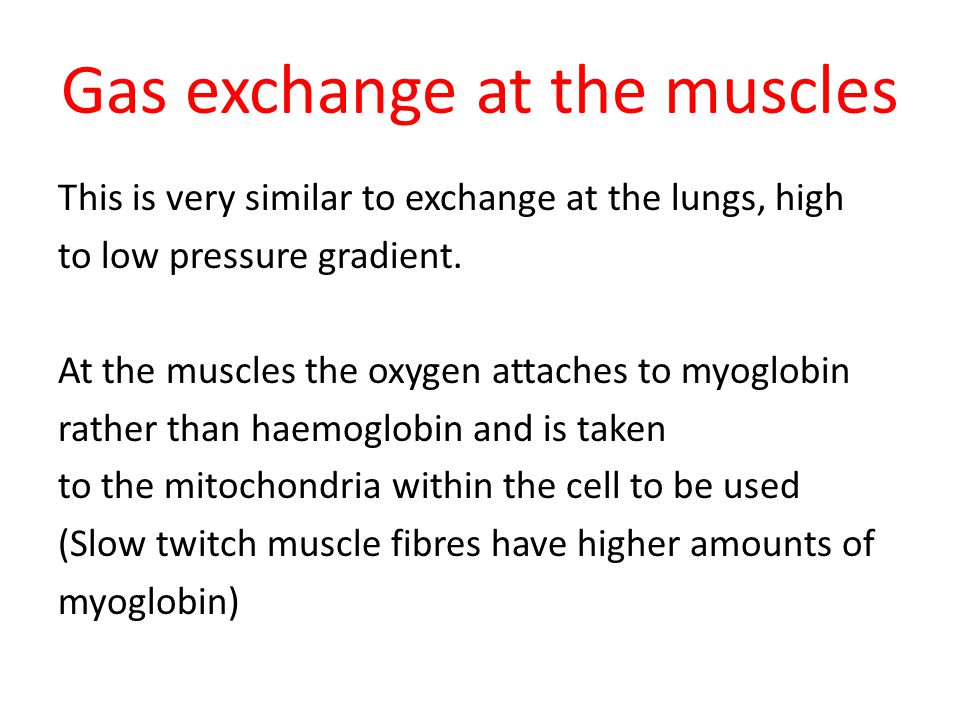 Gas exchange at the muscles This is very similar to exchange at the lungs, high to low pressure gradient.