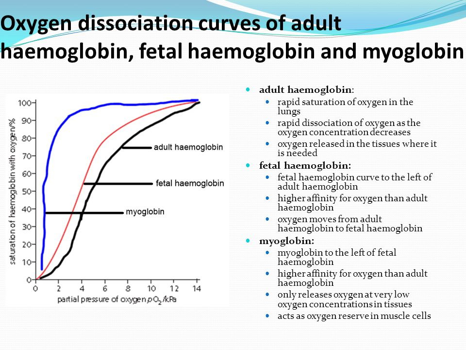 Oxygen dissociation curves of adult haemoglobin, fetal haemoglobin and myoglobin adult haemoglobin: rapid saturation of oxygen in the lungs rapid diss
