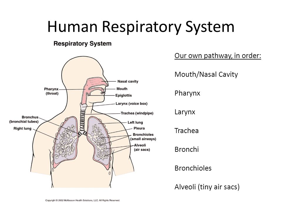 How Air Moves in and Out Inhaling: getting air with oxygen in Exhaling: getting air with carbon dioxide out Air is forced into and out of your lungs.