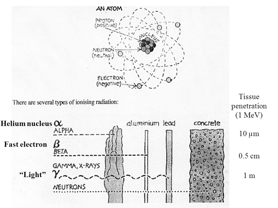 Helium nucleus Fast electron Light Tissue penetration (1 MeV) 10 µm 0.5 cm 1 m
