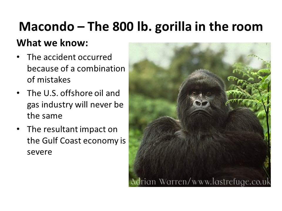 Macondo – The 800 lb. gorilla in the room What we know: The accident occurred because of a combination of mistakes The U.S. offshore oil and gas indus