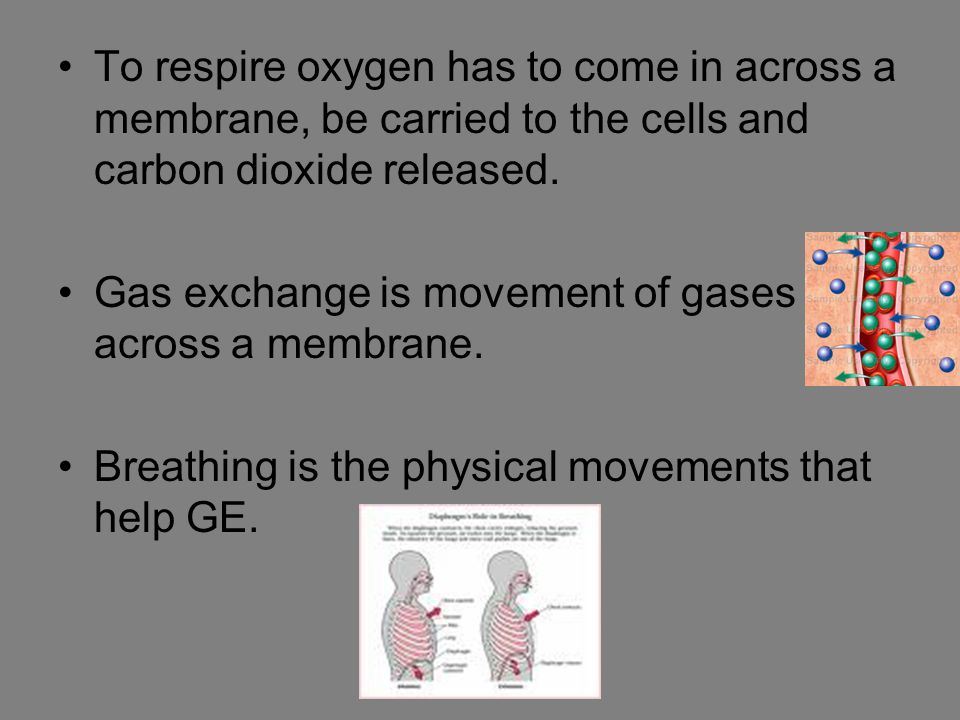 To respire oxygen has to come in across a membrane, be carried to the cells and carbon dioxide released. Gas exchange is movement of gases across a me