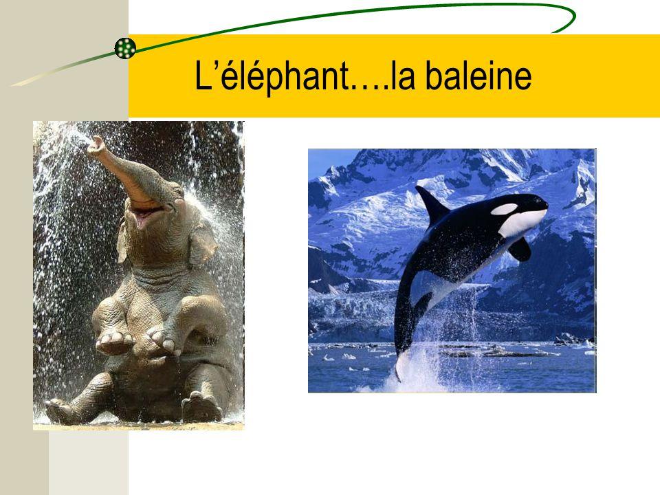 Léléphant….la baleine