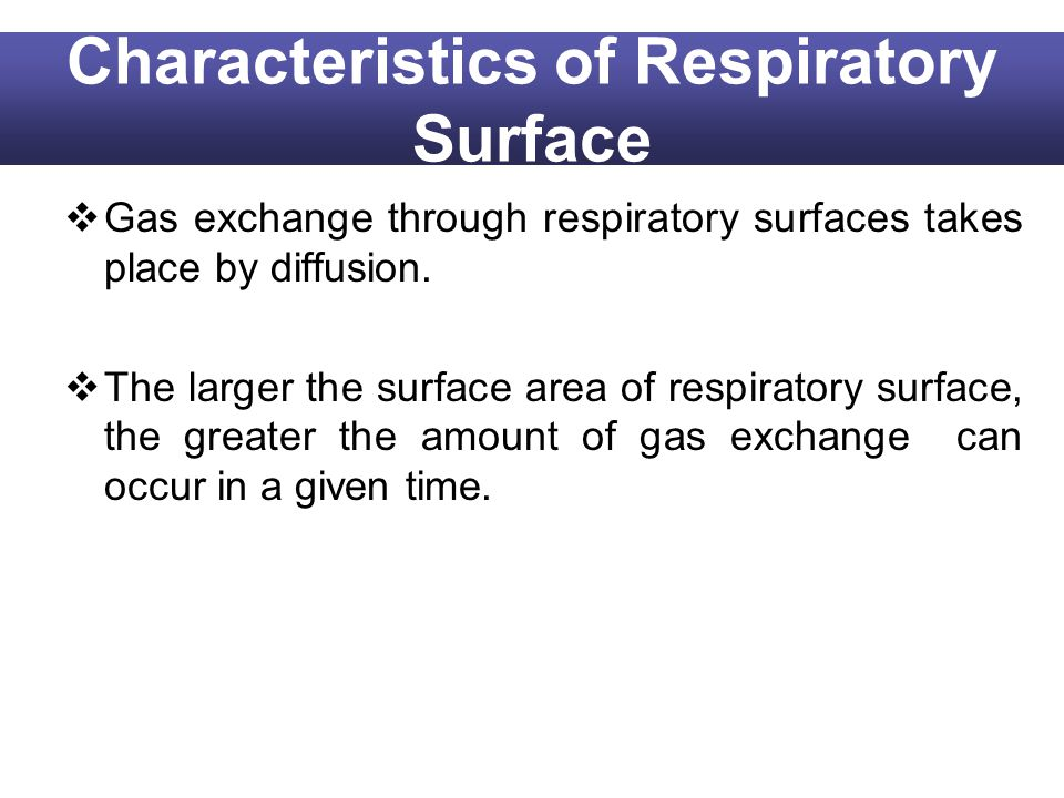 Characteristics of Respiratory Surface Gas exchange through respiratory surfaces takes place by diffusion. The larger the surface area of respiratory
