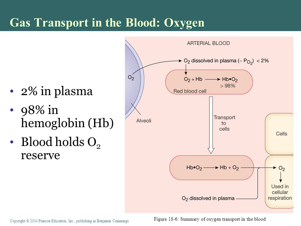 Copyright © 2004 Pearson Education, Inc., publishing as Benjamin Cummings Gas Transport in the Blood: Oxygen Figure 18-6: Summary of oxygen transport