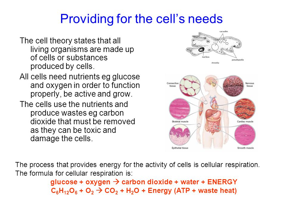 Providing for the cells needs The cell theory states that all living organisms are made up of cells or substances produced by cells. All cells need nu