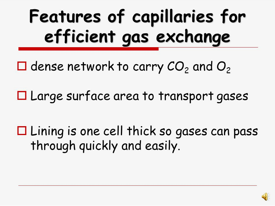 Features of Alveoli for efficient gas exchange large surface area to absorb oxygen.