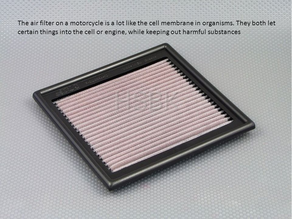 The air filter on a motorcycle is a lot like the cell membrane in organisms. They both let certain things into the cell or engine, while keeping out h