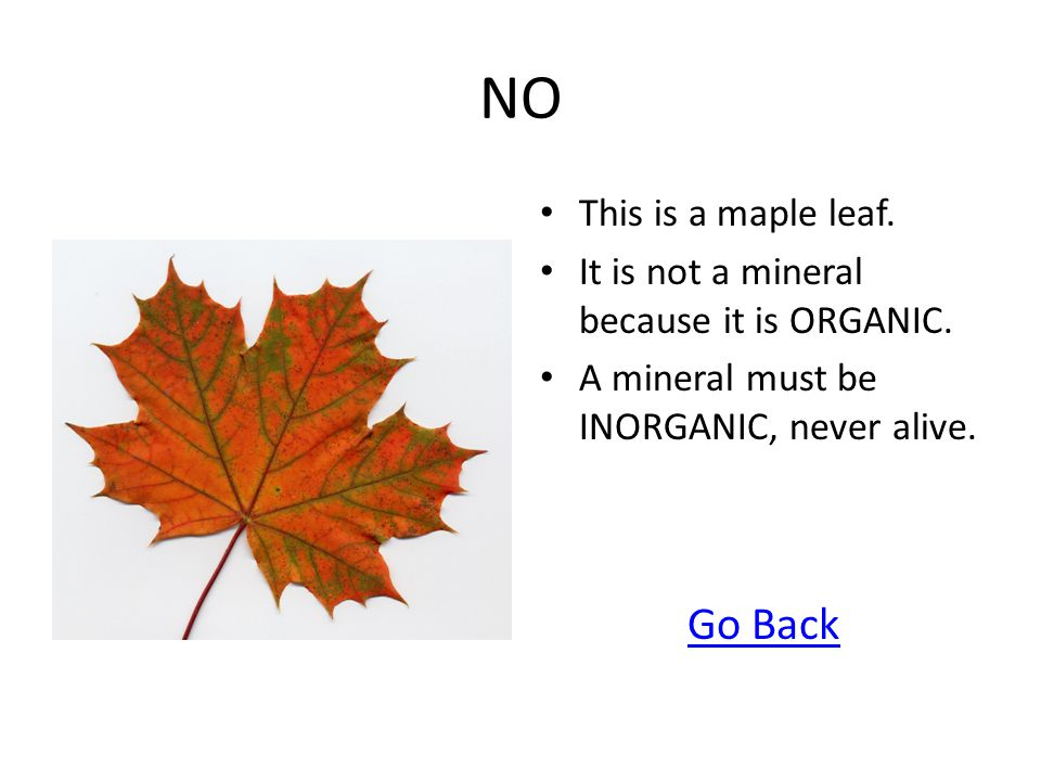 NO This is a maple leaf. It is not a mineral because it is ORGANIC. A mineral must be INORGANIC, never alive. Go Back