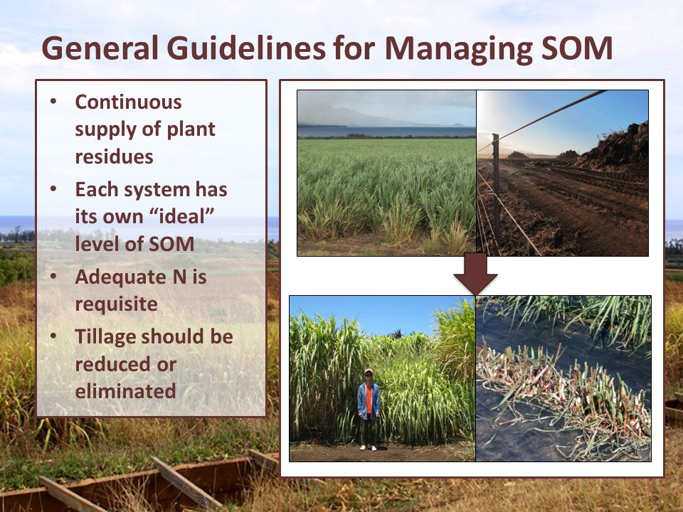 General Guidelines for Managing SOM Continuous supply of plant residues Each system has its own ideal level of SOM Adequate N is requisite Tillage sho