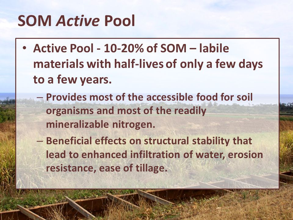SOM Active Pool Active Pool - 10-20% of SOM – labile materials with half-lives of only a few days to a few years. – Provides most of the accessible fo