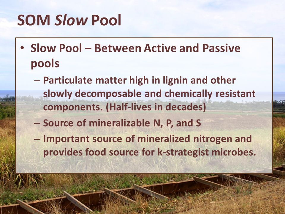 SOM Slow Pool Slow Pool – Between Active and Passive pools – Particulate matter high in lignin and other slowly decomposable and chemically resistant