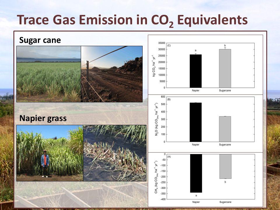 Trace Gas Emission in CO 2 Equivalents Sugar cane Napier grass